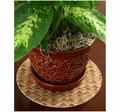 Drymate Absorbent Plant Coasters. Tan Bamboo Weave Print.